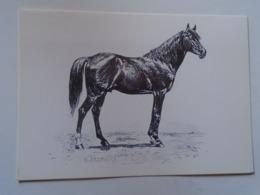 D168618 Horses Cheval Pferde - Hungary - V.C.G. Specht : O'Baján Senior -Race -Racing- Photo Alapfy Attila - Caballos