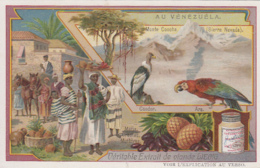 Chromos - Chromo - Pays Vénézuéla - Métis Créoles Mulâtres - Ara Condor - Liebig