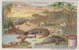 Chromos - Chromo - Pays Vénézuéla - Indien Forêt - Faune Lagune - Caïman Lamantin Boa - Liebig