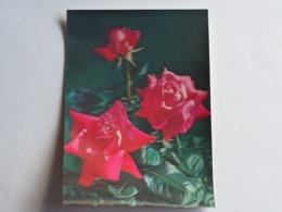 3d 3 D Lenticular Stereo Postcard Rose  Toppan    A 207 - Stereoscopische Kaarten