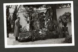 Photo Hoffmann Nr O4, Kanzler In Der Ostmark 1938, Am Elterngrab In Leonding! - Briefe U. Dokumente