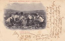 06 GRASSE - Cueillette Des Roses - Parfumerie Molinard Jeune à Grasse (A.M) - Grasse