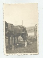 Plowing With Horses A373-253 - Personnes Anonymes
