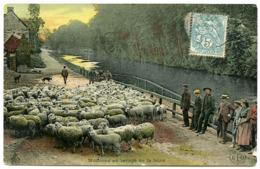 SHEEP REARING - WOOL WASHING / MOUTONS AU LAVAGE DE LA LAINE - Culturas