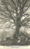 LUITRE  -- Le Grand Chêne De Feulavoy                                 -- Hamonic 1488 - Autres Communes