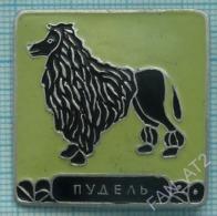 USSR / Badge / Soviet Union / RUSSIA Fauna. Dog. Poodle. - Animales