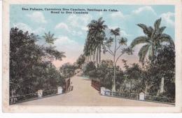 CUBA(SANTIAGO DE CUBA) ARBRE - Cuba