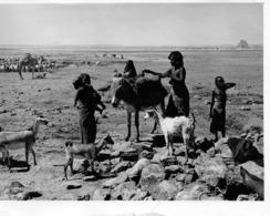 DJIBOUTI  - CAMPEMENT DE NOMADES AU PLATEAU DU DAI - Africa
