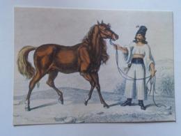 D168631 Horses Cheval Pferde - Hungary - Eauus Caballus Var. Hungaricus - Photo Alapfy Attila - Chevaux