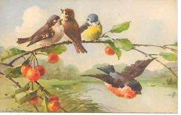 Illustrator - C. Klein - Birds, Vögel, Les Oiseaux, Uccelli, Cherries, Kirschen, Cerises - Klein, Catharina