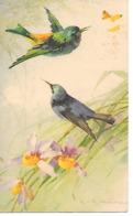Illustrator - C. Klein - Birds, Vögel, Les Oiseaux, Uccelli, Hummingbird, Kolibri, Colibri, Orchid - Klein, Catharina