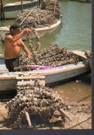REF 436 : CPSM Métier Pecheur Arcachon Le Travail De L'huitre Collecteur - Pesca