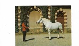 Haras Trait Percheron - Saint Lo