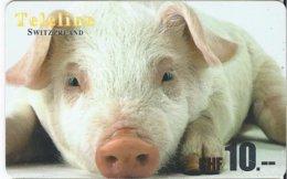 SWITZERLAND - TELELINE - PIG - Zwitserland