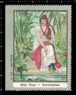 Old German Poster Stamp Cinderella Erinoffilo Reklamemarke Fairy Tales Märchen Sleeping Beauty Dornröschen, Frog Frosch. - Fiabe, Racconti Popolari & Leggende