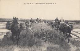 ILE DE RE: Marais Salants - Le Charroi Du Sel - Ile De Ré