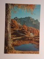 Alpe Giulie, Monte Lussari, Julische Alpen (gelaufen 1991); H30 - Italy