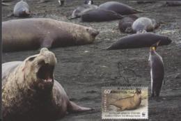 3446  Máxima  Kingston 2011, Southern Éléphant Seal., Elefante Marino Del Sur. - Cartes-Maximum (CM)