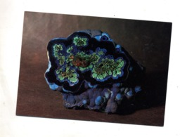 Carte Azurite Malachite Bisbee - Etats-Unis