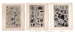 EXPLICATION DU TABLEAU . 3 CHROMOS - Réf. N°23072 - - Colecciones