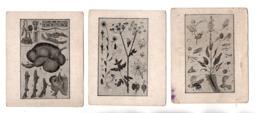 EXPLICATION DU TABLEAU . 3 CHROMOS - Réf. N°23073 - - Colecciones