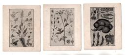 EXPLICATION DU TABLEAU . 3 CHROMOS - Réf. N°23074 - - Colecciones