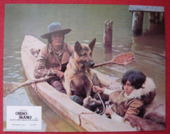 12 Photos Du Film Croc Blanc (1973) - Albums & Collections