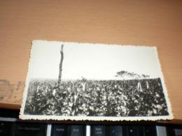 Vineyard - Viñedos