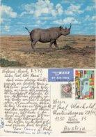 Kenya 1972 - Nashorn, Rhinozeros - Rhinozeros