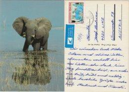RSA 1986 - Elefant - Elefanten