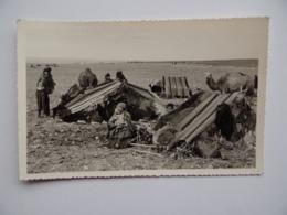 Photo Région De TOZEUR Tunisie Camps De Nomades 1950/60 Environ - Lieux