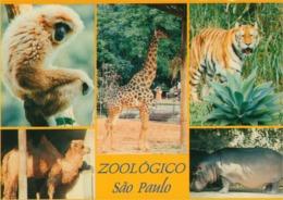 Brazil - Sao Paulo - (Zoo) Zoologico - São Paulo