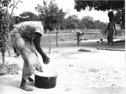 Photo R. Centrafricaine. Région De Bossembélé Séchage Du Manioc 1980  Photo Vivant Univers - Afrika