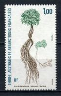 TAAF 1992  N° 164 ** Neuf MNH Superbe Flore Colosanthus Kerguelensis Flora - Tierras Australes Y Antárticas Francesas (TAAF)