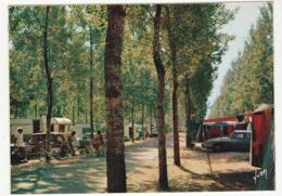 LA GRANDE MOTTE  (Hérault) - Le Camping - Vue Générale - Voitures DS Citroën - Francia