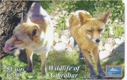 GIBRALTAR - WILDLIFE OF GIBRALTAR - RED FOX - 3.000 EX - Gibraltar