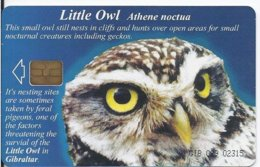 GIBRALTAR - WILDLIFE OF GIBRALTAR - LITTLE OWL - 3.000 EX - Gibraltar