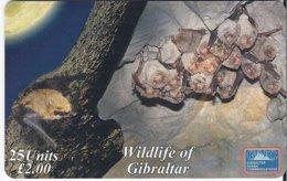 GIBRALTAR - WILDLIFE OF GIBRALTAR - SCHREIBER'S BAT - 3.000 EX - Gibraltar