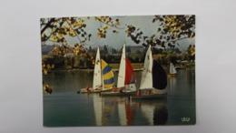 Voiliers Sur Le Lac - Divonne Les Bains