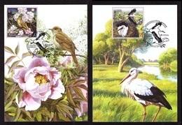 Ukraine 2019 MAXI MAXIMUM CARD EUROPA CEPT National Birds Of Ukraine White Stork Oriental Nightingale #805 - Ukraine