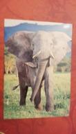 TANZANIA - Elephant - Serengeti National Park - Tanzanie