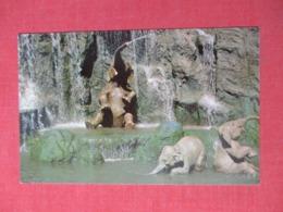 Elephant Bathing Pool   Disneyworld     Ref 3674 - Disneyworld