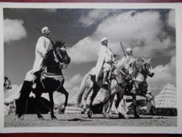 MAROC - Cavaliers De Tribus. (Cavaliers Armés Sur Leurs Chevaux) - Non Classés
