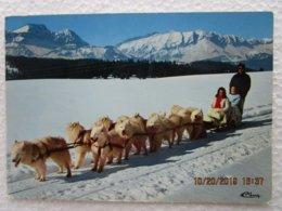 CP 73 HAUTELUCE Au Col Des Saisies - ATTELAGE DE CHIENS SAMOYEDES élevage De M. Gonin - Autres Communes
