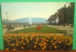 GINEVRA Quai Wilson Cartolina  Viaggiata 1988 Targhetta Storia Postale - GE Ginevra