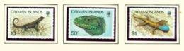 CAYMAN ISLANDS - 1987 Lizards Set Unmounted/Never Hinged Mint - Cayman Islands