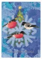 Postal Stationery - Birds - Bullfinches In Winter - Finnish Mental Health Association - Suomi Finland - Postage Paid - Finland