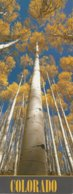 """Colorado Quaking Aspen (Populus Tremuloides) Are Found In Mountain Forests Throughout Colorado 25 Cm X 10 Cm 10"""" X 4"""" - Trees"""