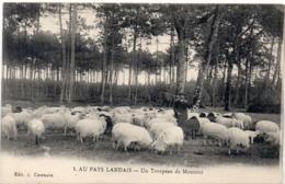 Au Pays Landais - Un Troupeau De Moutons (117482) - Ohne Zuordnung