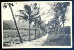 Cpa Des Antilles Saint Christophe Et Niévès St Kitts Coconut Trees W.I.    LZ74 - Saint-Christophe-et-Niévès